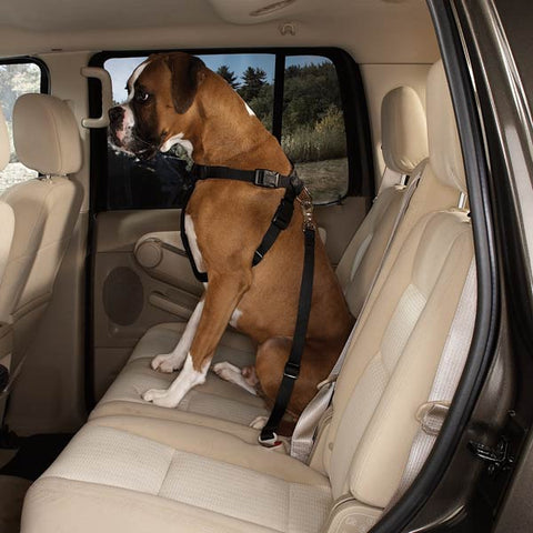 Guardian Gear Dog Car Harness BLACK-DOG-Guardian Gear-X-SMALL-Pets Go Here black, guardian gear, harness, l, nylon Pets Go Here, petsgohere