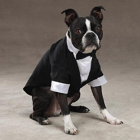ESC Yappily Ever After Groom Dog Tuxedo LARGE-DOG-East Side Collection-XX-SMALL-Pets Go Here