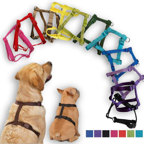 Zack and Zoey Basic Nylon Dog Harnesses 8-14 in, dog collar, dog harness, harness, nylon, zack & zoey Pets Go Here, petsgohere