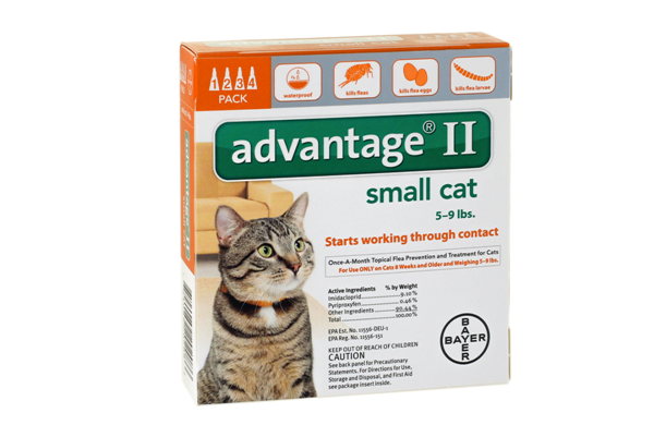 Advantage for Small Cats