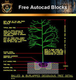 ★Free CAD Details-Deciduous Tree Detail - Architecture Autocad Blocks,CAD Details,CAD Drawings,3D Models,PSD,Vector,Sketchup Download