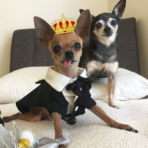 PetSmart's Royal Adoption Weekend