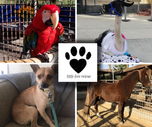 Giving Back 2018: Little Love Rescue