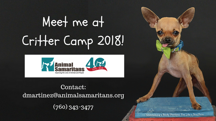 Boogie Shoes is going to Critter Camp!
