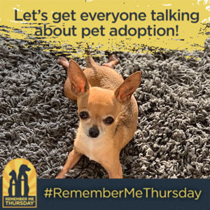 Remember Me Thursday 2019 - I'm an Animal Luminary!