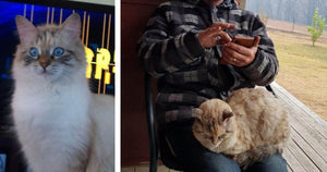 Family Thought Their Cat Was Lost In Australian Bushfires But She Miraculously Was Reunited With Them