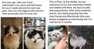 These 18 Before-And-After Photos Of Rescued Cats Are The Best Proof That Adoption Is A Wonderful Thing To Do
