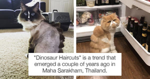 These Cats Really Don't Seem To Appreciate Their Dinosaur Haircuts And We Should Consider It A Warning
