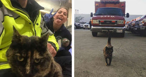 Firefighters Told They Would Have To Get Rid of Their Beloved Station Cat