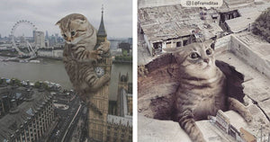 This Guy Photoshops Giant Cats And Creates Some Incredible Cat-zilla Scenes