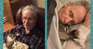 Cat Cuddles His Human Man With Alzheimer's Everyday