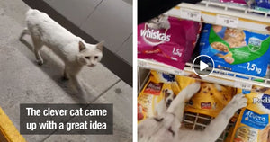 Clever Stray Cat Ushers People To The Cat Food Section Of A Store Then Show Them His Favorite Treats