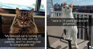 Today Is The Purr-fect Day To Celebrate These Senior Kitties