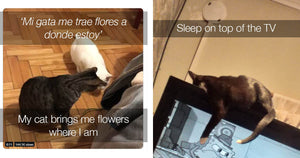 Twitter Users Share The Weirdest Things Their Cats Do And We Were Not Prepared