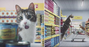 German Grocery Ad About Cats Will Have You in Fits of Laughter