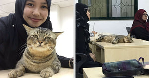 A Cat Walks Into University Lecture, Immediately Falls Asleep