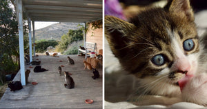 Every Cat Lovers Dream Job On A Greek Island Is Everything You Need Right Now