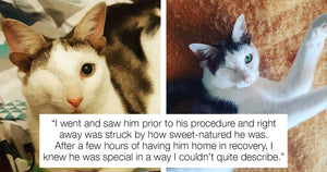 Adorable Cat With Four Ears And Only One Eye Finds An Owner To Love Him Forever