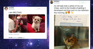 The Best & Most Purr-fect Cat Tweets of 2019
