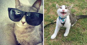 These 10+ Hilarious Cat Expressions Will Perfectly Sum Up Your Life