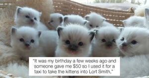 Australian Girl Donates Her Own Birthday Money To Save 14 Kittens