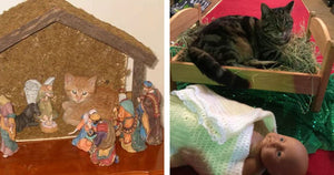 This Is What Happens When Cats Insert Themselves Into Nativity Scenes