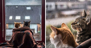 Photographer Takes Majestic Photographs Of Her Cats In Front Of The Window Whenever It's Raining