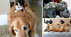 19 Cats Whose Purr-fect Pillow Is A Dog