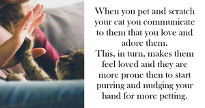These Are The 5 Most Important Reasons Why You Should Pet Your Cat More Often