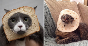 Hilariously Funny Cats That Are 'Stuck' In Bread