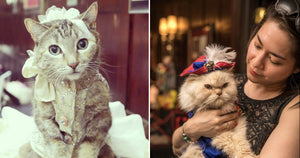 This 1920's-Themed Cat Show Is The Cutest Thing Ever