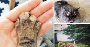 12 Things Only Cat Owners Understand