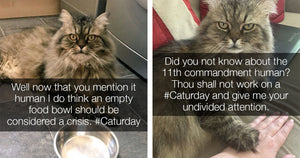Twitter Account Of British Cat Hilariously Shares Daily Musings From Cat's Purr-spective