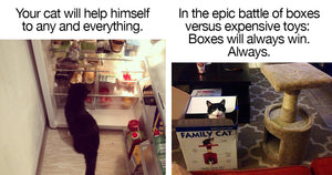 16 Facts of Life When You Own A Cat