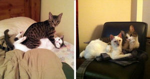 Cats Who Were Caught In The Act When You Came Home Early And Surprised Them