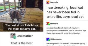 Cat Tumblr Posts Will Cause Any Cat Owner To Think, 'Yup, Spot On'
