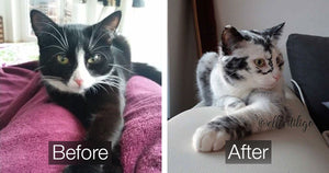 Cat Developed A Rare Condition That Changed Its Fur Color Over Time