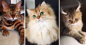 14 Most Beautiful Cats In The World That Will Make You Fall In Love Instantly