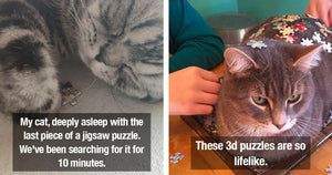 Photos That Prove Cats Will Do Everything In Their Power To Stop You From Finishing Your Puzzle
