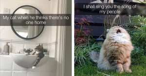 We Seriously Cannot Get Enough Of These Hilarious Cats
