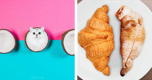 This Girl Decided To Photoshop Cats Into Food And Ended Up With a Lot Of Followers On Instagram