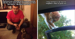 16 Hilarious Cats That Let Themselves In