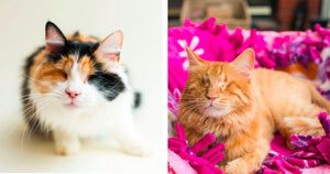 Photographer Captures Blind Cats Unique Beauty In An Effort To Help Them Find Homes