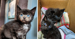 This Orphaned Kitten Was Brought Back From The Brink And When Her Fur Started Growing Back Everyone Was Surprised