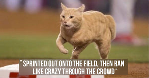 The Hilarious History of Cats Disrupting Sporting Events