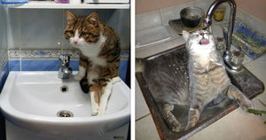 Hilarious Pictures Perfectly Depicting The Endless Battle Between Cats And Sinks