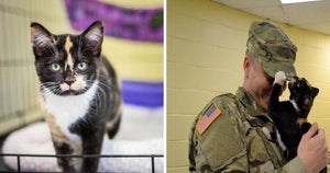 This Man Went To The Shelter To Adopt A Dog And Was Instead Chosen By A Kitty