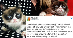 The Internet's Most Beloved and Famous Cat, Grumpy Cat, Has Gone to Cat Heaven