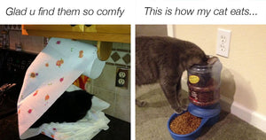 These Posts Show Cats Do Whatever They Want, Whenever They Want