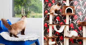 A UK Based Luxury Cat Hotel Is Letting Cats Stay Free If Their Owners Get COVID-19